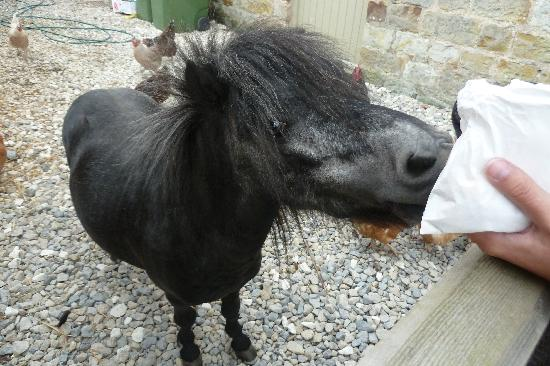 The Barn Cafe Bistro: feeding pony