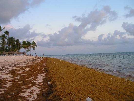 Sea weed invasion one day. - Picture of Natura Park Beach Eco Resort & Spa, Punta Cana - TripAdvisor
