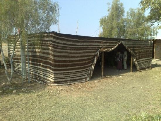 Desert Ashram: Camping Area