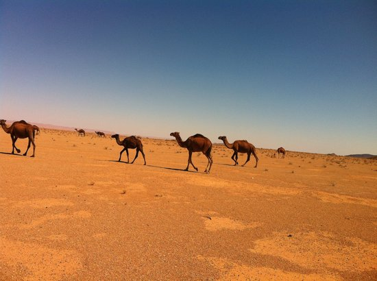 Marrakech Expedition - Day Trips: non siamo noi...
