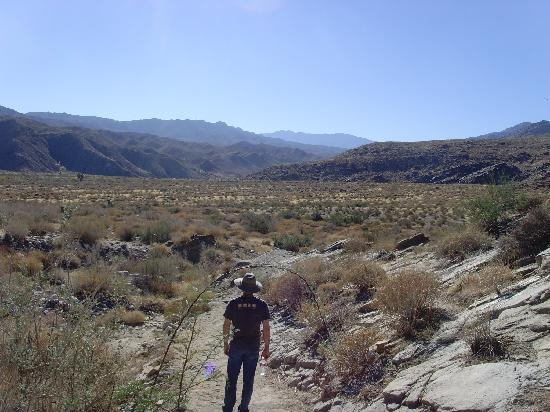 Agua Caliente Indian Canyons: Murray Canyon
