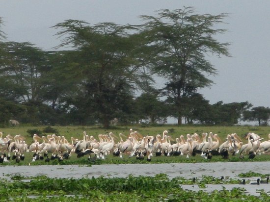 Rift Valley Province, Kenia: atroupement