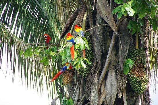 Tamandua Eco Tours