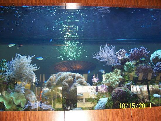 The Seagate Hotel & Spa: Lobby area fish tank