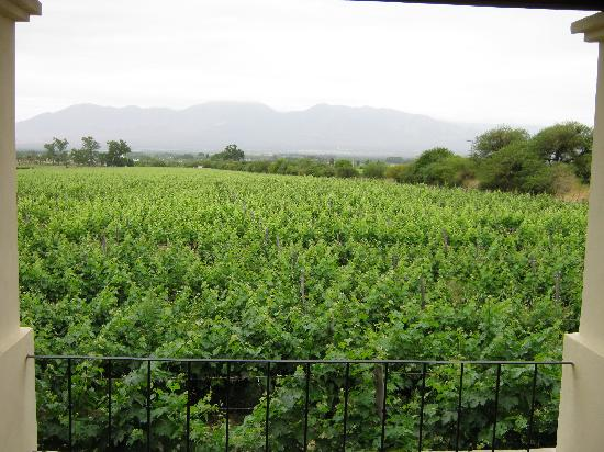 Vinas de Cafayate Wine Resort: View from our room