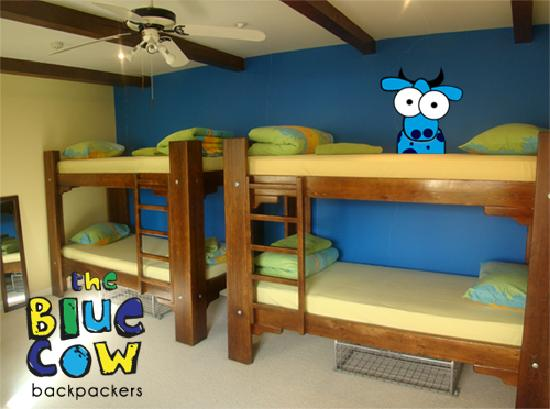 Blue Cow Hostel : Shared 6 Bed Dorm Room