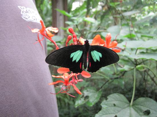 Mountain Equestrian Trails: At the butterfly farm just across the way