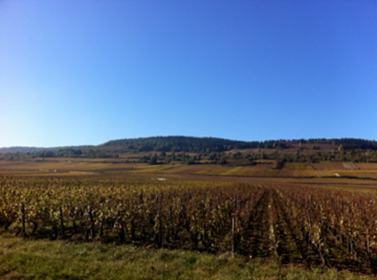 Burgundy on a Plate: Famous vineyards, alas, only brief drive-by.