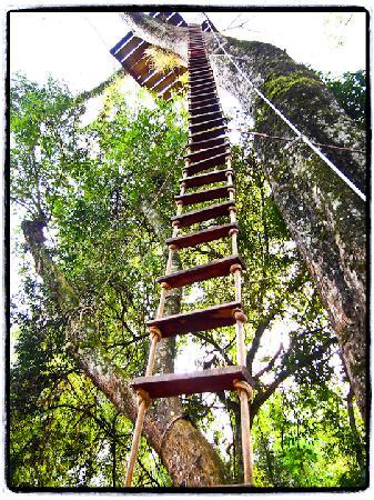 La Aldea de la Selva Lodge: Rope ladder in the jungle!! Do it!!