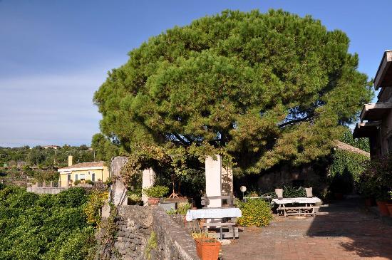 Agriturismo Il Limoneto: The terrace