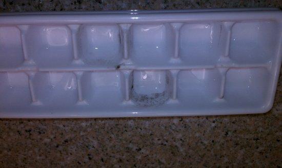 Quality Inn & Suites Coliseum: Mildewed ice cube tray