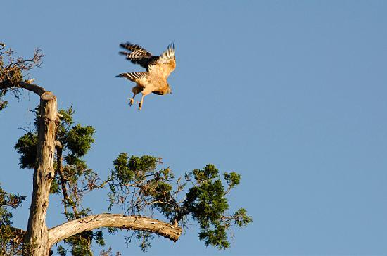 Marriott's Grande Vista: Local wildlife