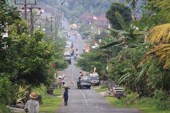 Puri Kelapa Garden Cottages: Bali rizières