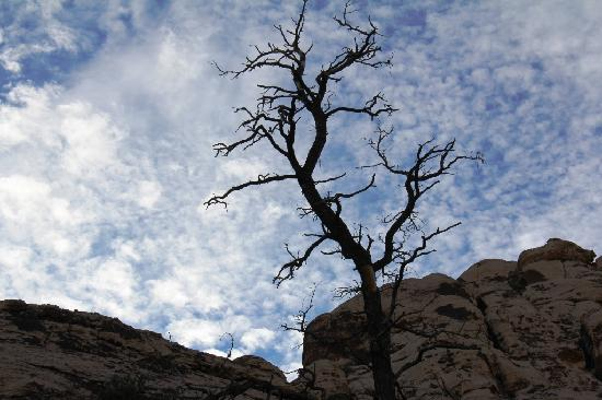 Grand Canyon by One Day Tours: Sky is so beautiful here