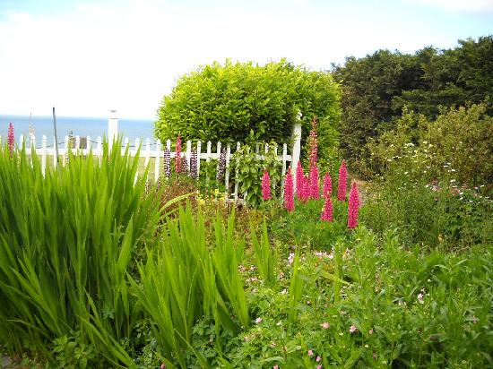 Sea Cliff Gardens Bed & Breakfast : Could you ask for more?