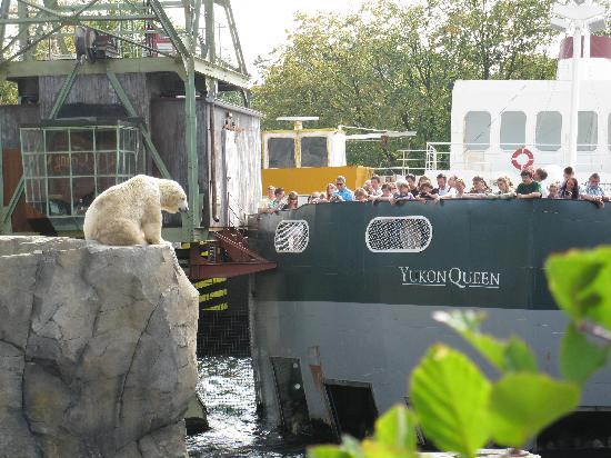Erlebnis Zoo Hannover: Der Yukon läßt grüßen !
