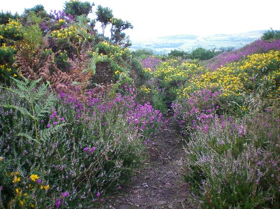 The Old Cider House: Summer in the Quantock Hills