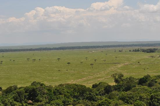 Mara Timbo Camp: Masai Mara