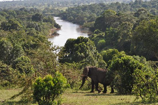 Mara Timbo Camp: Blick auf den Mara River