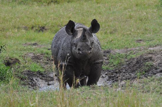Mara Timbo Camp: Nashorn