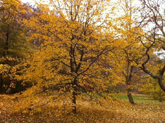 Im Park des Hotels, Herbst 2011