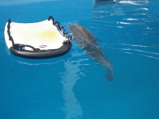 Clearwater Marine Aquarium: Winter next to her raft