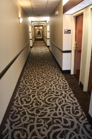 Hampton Inn and Suites Toledo-North: Brand new carpet (installed Oct '11)