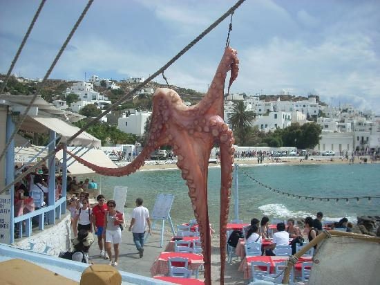 Salparo: Octopus dries in the sun on the rigging of Babulas' fishing boat.