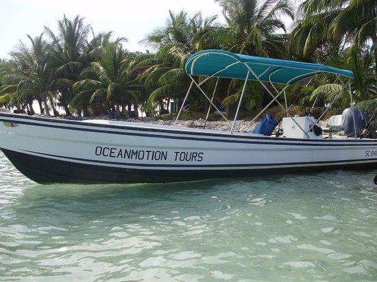 Ocean Motion Tours