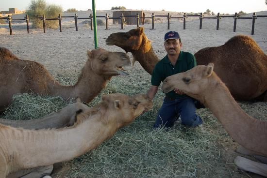 The Desert Ranch: oh,so friendly camels!