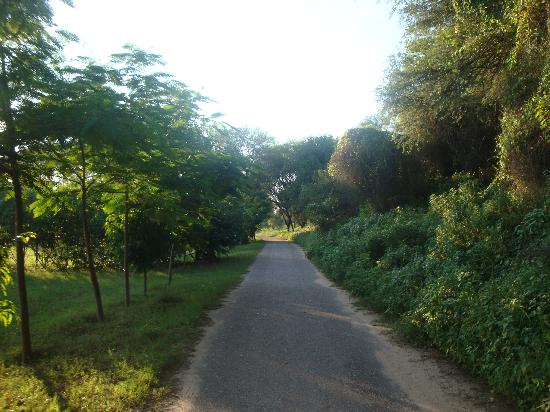 The Tree House Resort: Road to the resort