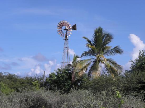 Auriga Ecolodge: Het terrein van 1,3 ha straalt rust uit