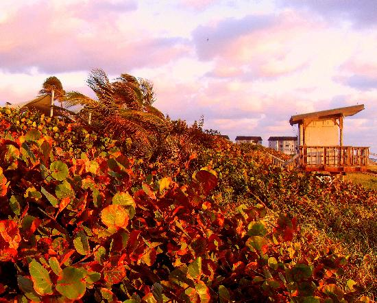 Boynton Beach, FL: Sea Grapes & Life Guard Station @ Sunrise