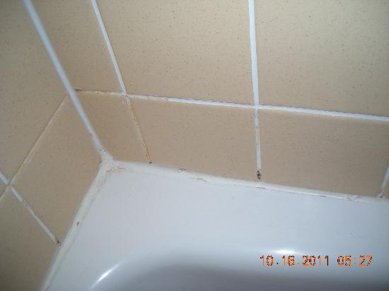 Howard Johnson Closest to the Falls and Casino : Mold in shower
