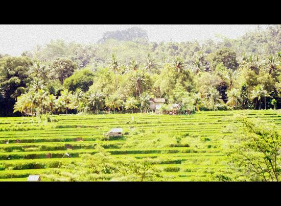 Kuta Puri Bungalows: Rice terraces - Denpasar