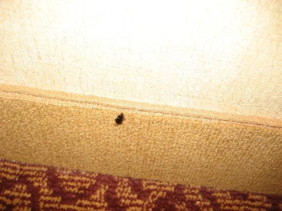 Embassy Suites by Hilton Dallas Frisco Hotel Convention Center & Spa: Beetle in my room