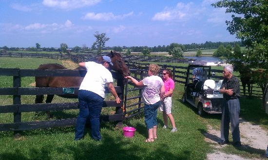 The Local Tour Guide: A trip to a retired horse farm!