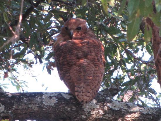 Flatdogs Camp: rare fishing-owl