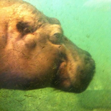 Erlebnis Zoo Hannover: really big !!
