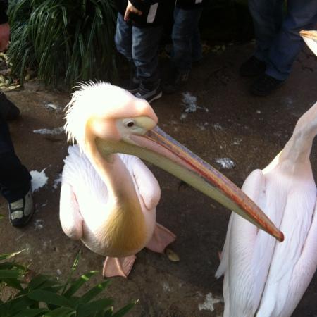 Erlebnis Zoo Hannover: cute .