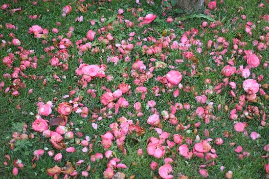 Chateau La Tour Apollinaire: Camellias blossom in winter