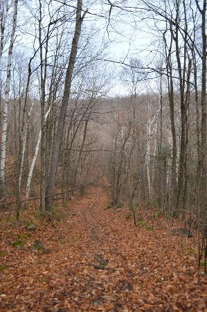 Auberge du Trappeur: promenade dans le bois