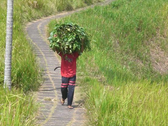 Pariliana, Maison et Table d'Hotes a Bali: les rizières