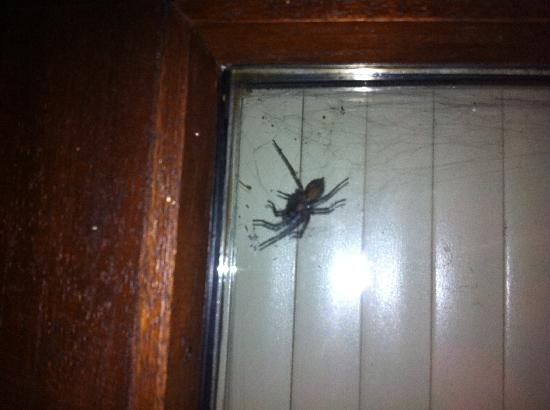Cergy, France: Found in my room!