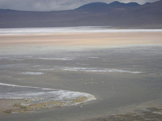 Tonito Tours: Laguna Colorada