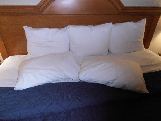 Comfort Inn JFK Airport: Not very Comfortable Pillows...very small with not allot of support