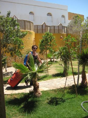 Dive Urge garden