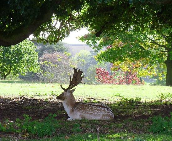 Powderham Castle: We have a heard of Deer that can be explored on our Deerpark Safari
