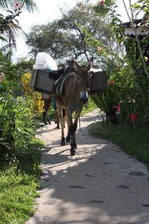Pousada Colibri: Transportation in Morro de São Paulo