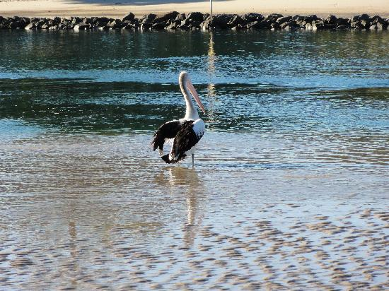 Hillhaven Holiday Apartments: Pelican
